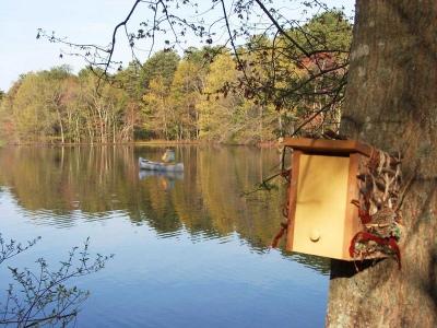 On Meadowbrook Pond