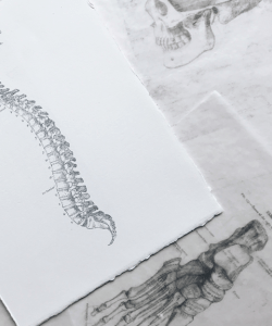 Medical drawings of bone structures. A white sheet of paper with a drawing of a human spine lies on top of wax transfers of a skull and a foot.