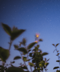 A starry sky; blurred leafy branches and a single flower appear in the foreground