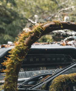 A close-up of the cover of Joy Priest's debut collection, Horsepower. The image is of a steering wheel and dashboard of an apparently abandoned Volvo car that has become overgrown with moss.