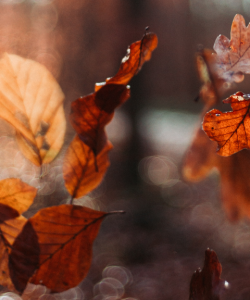 Red-orange leaves, illuminated by evening light, float toward the ground.
