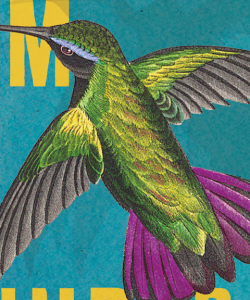 Close-up of the cover of Myriam J. A. Chancy's What Storm, What Thunder. An illustrated hummingbird hovers above a blue background. The bird has brilliant green body feathers, purple tail feathers, and a streak of blue above its eye.