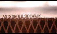 Ants on the Sidewalk