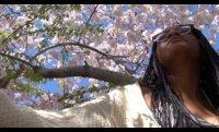 Sonnet 54 - Sakura Park, Manhattan