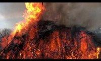"Dear Poet 2021: Forrest Gander Reads ""Wasteland: on the California Wildfires"""