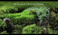 The Sound of a Wild Snail Eating/Book Trailer